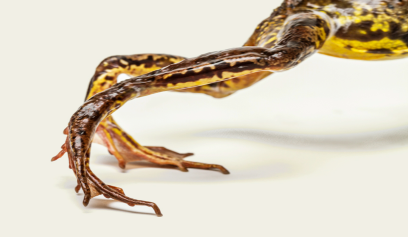 Frosch ohne Text Blog