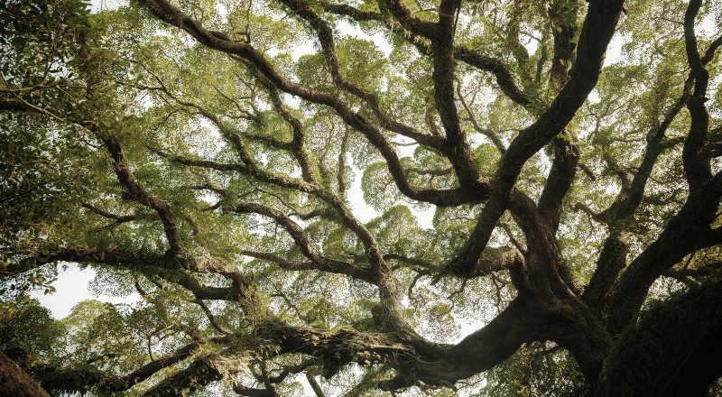 Katapult Baum Missionstatement